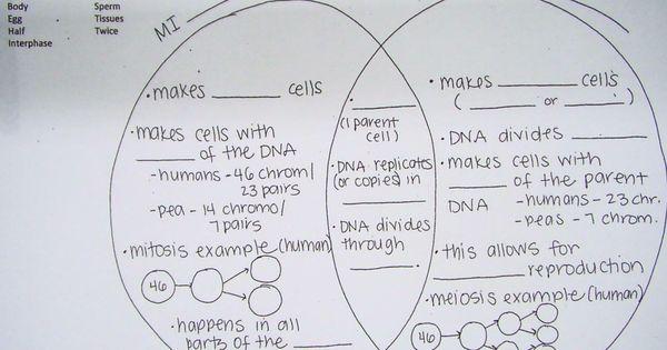 C Fb A F A F on Mitosis And Meiosis Venn Diagram Worksheet