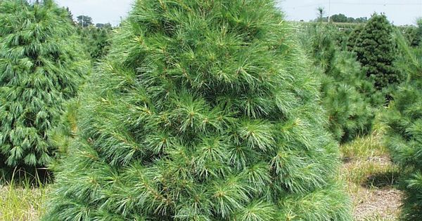 Best Place To Buy Artificial Christmas Trees
