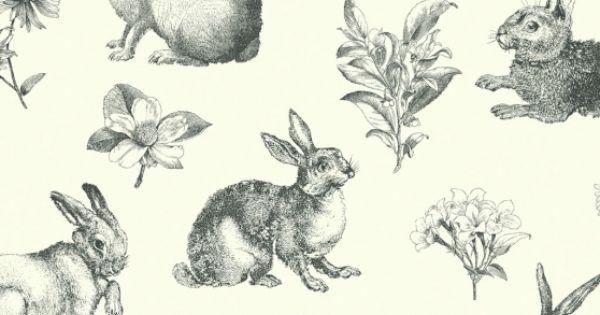 York white bunny wallpaper 4260
