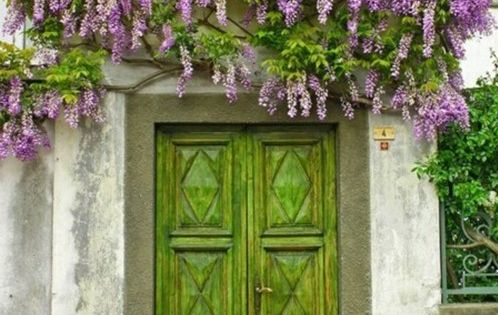 green door, purple flowers