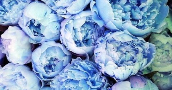 Blue peonies | iPhone Wallpapers | Pinterest | Blue ...