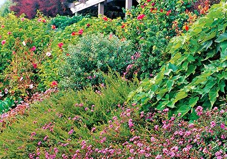 Landscaping a slope slopes can really set of low growing for Low growing landscape plants
