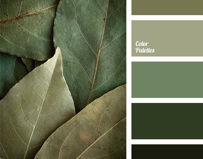 A monochrome green color palette perfectly combines shades for Olive green colour combination