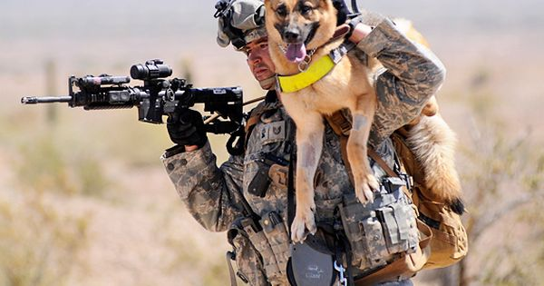 SOLDIER DOGS The Wall Street Journal published an essay taken from a new book about canines in the military called Soldier Dogs, written by Maria Goodavage.  The photograph above is of Tina, a German Shepherd, who is one of the dogs mentioned in the book...