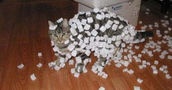 Packing peanuts on Miss Kitty. Funny Cat Pictures
