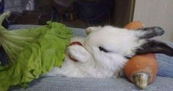 Bunny Sleeping Nice Bed Bunny Rabbits Pinterest