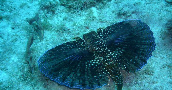 Caribbean Sea Creatures