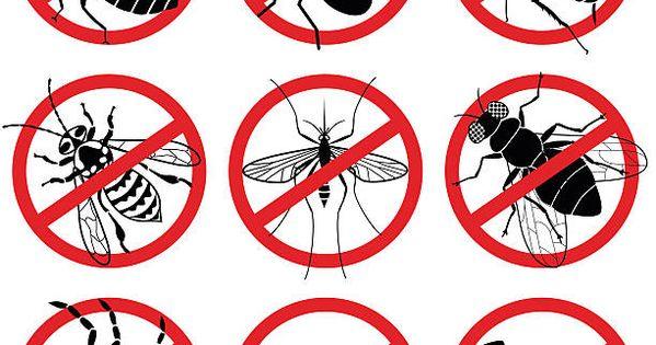 No Bugs Vector Art Free Vector Art Illustration