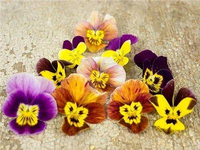 Winter Flowering Hiemalis Pansy Edible Flower Garden Pansies Flowers Winter Flowers