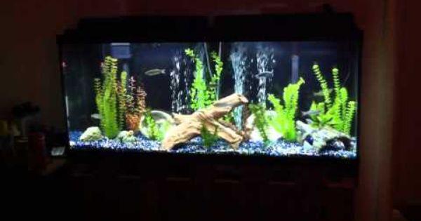 Black Background To Make It Pop Freshwater Aquarium Black Backgrounds Fresh Water