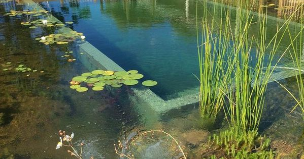 Constructed in north east victoria this is a shining for Pool designs victoria