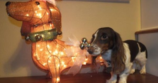 Holiday Living Lighted Dachshund Christmas Outdoor Yard Decoration
