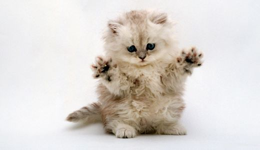 Collection Of Cute Baby Animal Wallpapers Cute Baby Animal Pictures Cuddly Animals Cute Animals Cute Cats And Kittens
