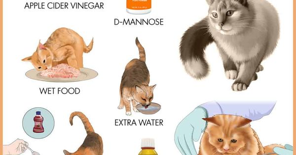 How To Treat And Prevent Urinary Tract Infections In Cats Top 10 Home Remedies In 2020 Cat Care Cat Uti Cat In Heat