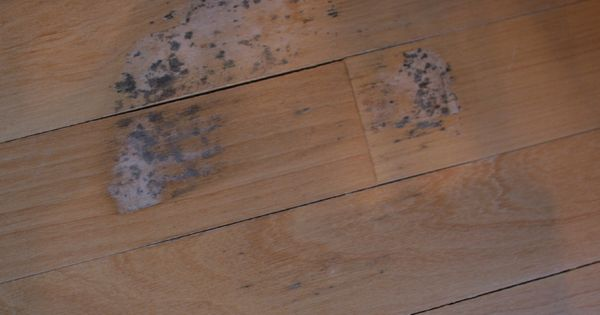 Remove Mold Stains From Wood Floors Stains Remove Mold