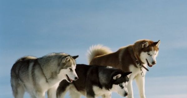 From Eight Below Love This Movie Please Check Out My Website