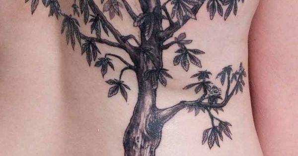 Trees  Mango and Tree ...