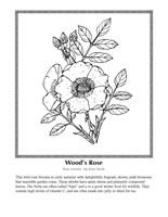 Wildflower Coloring Pages Wild Flowers Color Coloring Book Pages