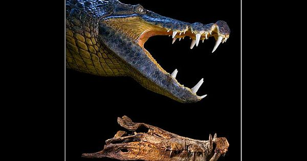 recreating prehistoric life jurassic park essay Recreating prehistoric life: jurassic park essay - recreating prehistoric life is at the fore-front of interest in the scientific community large strides have been made in uncovering the genome sequences of neanderthal.