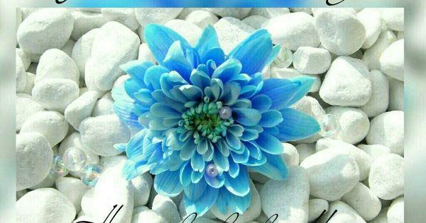 Pin By Wil2do On Good Morning Blue Flower Wallpaper Flower Wallpaper Beautiful Flowers