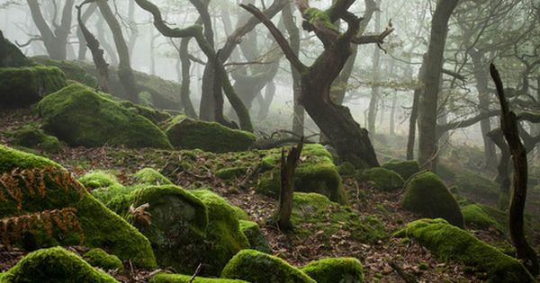 Dark Wood, Peak District National Park, England, UK - Nature, so nurturing...