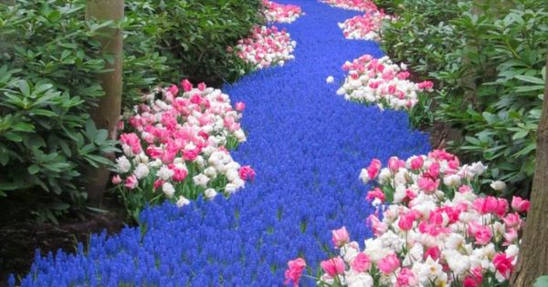 river of blue flowers. Keukenhof, also known as the Garden of Europe,