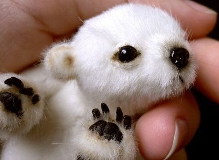 Teeny, tiny baby polar bear. How adorable! Baby Animals cute baby Animals|