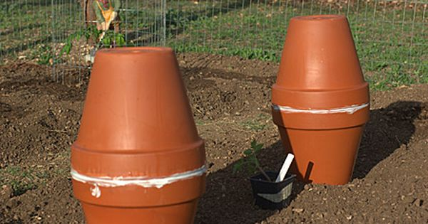 Homemade Ollas To Be Buried In The Garden And Filled With Water Through Hole In Top Water Seeps Through Clay As Ve Veggie Garden Water Garden Farm Gardens