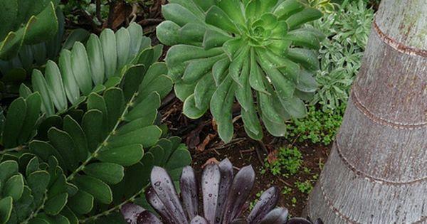 Un cierto n mero de especies se cultivan como plantas de for Especies de plantas ornamentales