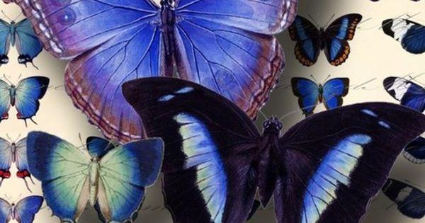 Wedding Ideas: purple-blue-butterflies