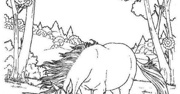 Difficult And Hard Coloring Page Of Realistic Unicorn Fantasy Coloring Pages Pinterest