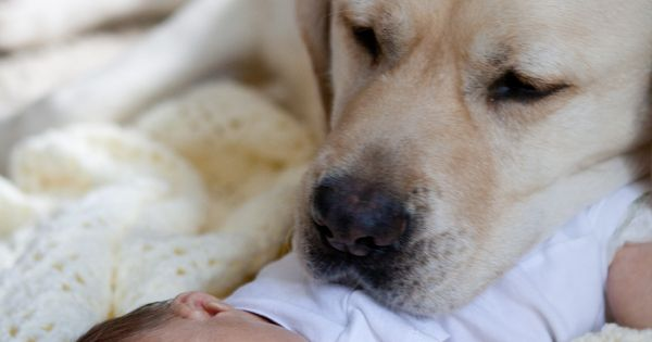I will protect you, tiny human. Great idea to include the family