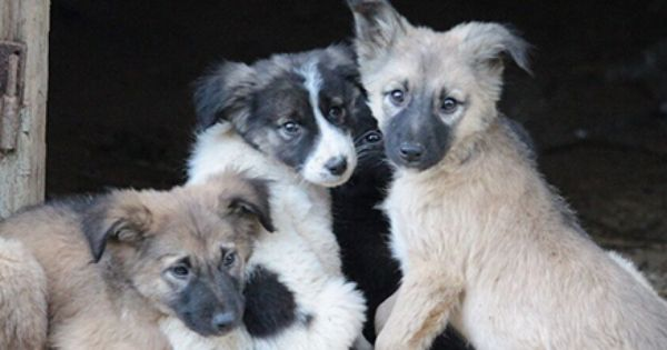 These Bosnian Dogs Need Us Now Dogs Animal Rescue Animals