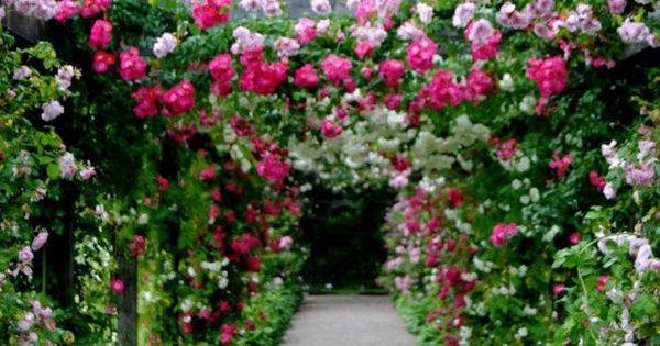 Rose arbor pinterest - Balkon arbor ...