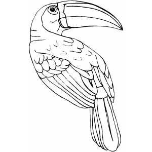 Free Rainforest Coloring Pages Toucan Coloring Page Bird