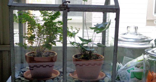 Ferns In The Kitchen Rustic Wardian Case Terrarium