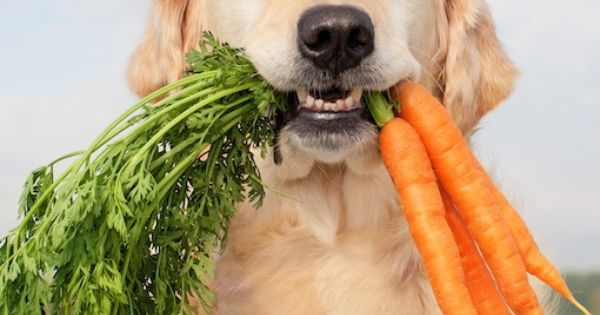 6 natural dog snacks - Try a frozen carrot in place of