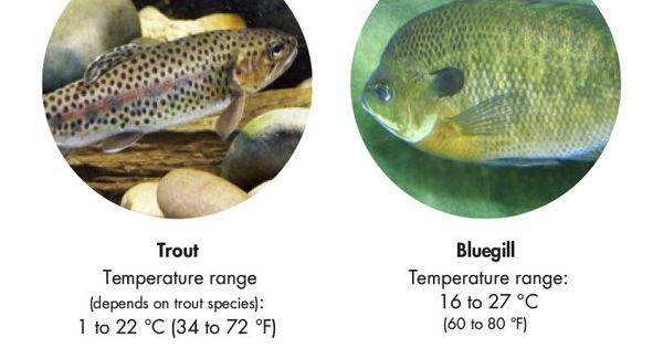 The best fish for aquaponics aquaponics fish and for Hydroponics and fish