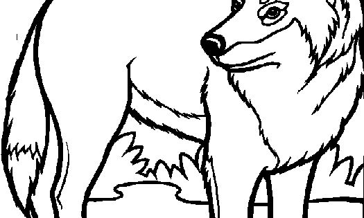 Wolf Coloring Pages For Kids Wolves Coloring Pages