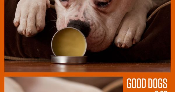 Make your own DIY paw wax and nose conditioner. Does your dog