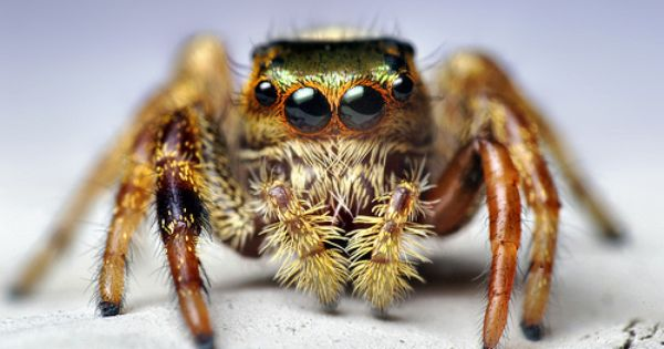How To Get Rid Of Jumping Spiders In House