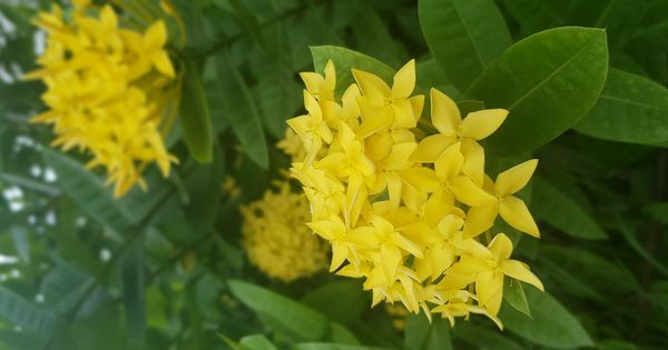 صورة عالية الدقة خالية من زهرة أصفر أخضر نبات مزهر نبات غشاء زهرة برية Plants Photo