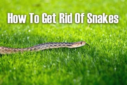 How To Get Rid Of Snakes Http Homestead And Survival