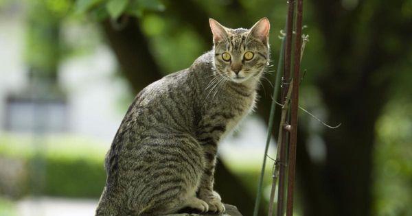 Katzenkot Im Garten Unterbinden Katzenkot Pflanzen Gegen Katzen Katzen