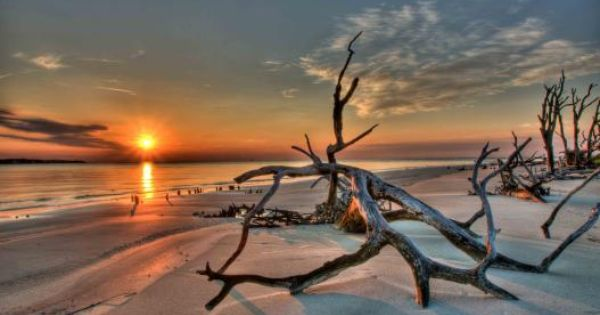 Driftwood Beach By Jimmy Day Jekyll Island Ga Kodak