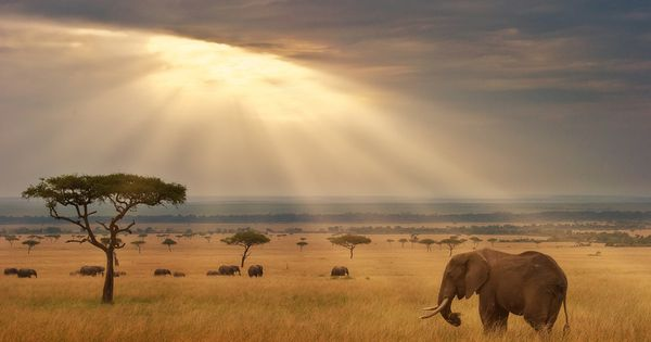 Amazing Africa! Would love to go on an African Safari someday... JetsetterCurator