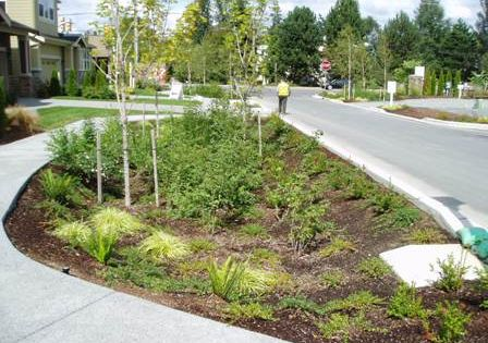 Rain garden design reducing runoff through rain for Rain garden design
