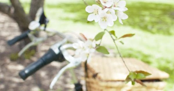spring bicycle picnic