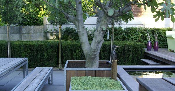Stadstuin moderne tuin met strakke belijning vijgenboom beplanting pinterest moderne - Moderne tuin ingang ...