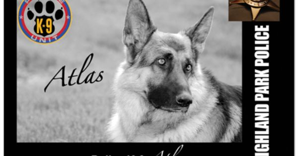Beautiful Police Dog Police Dogs Therapy Dogs Service Animal